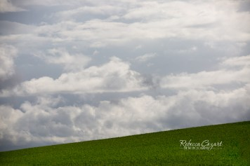 landscape-hill-green