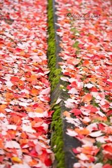 leaves-71