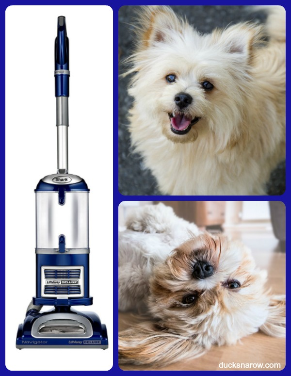 Best vacuum for pet hair I have ever owned! #DucksnaRow #pethair #cleaning #tips