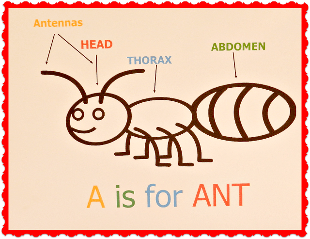 A Is For Ant Ducks N A Row