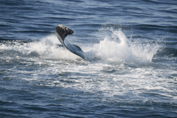 whales, whale watching