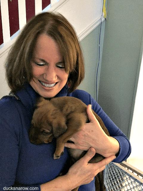 puppy love, dog owner, new puppy