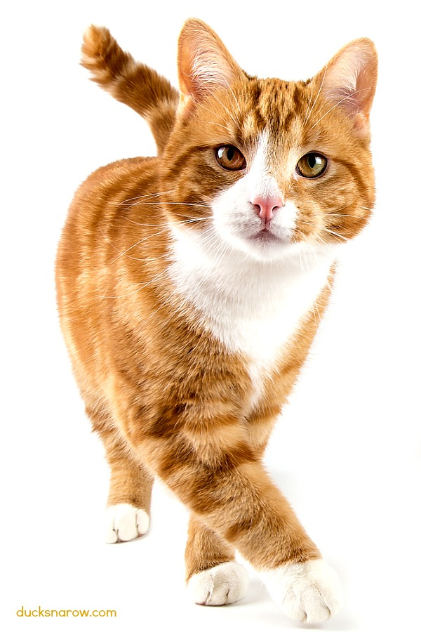 Letter C is for Cat lesson for preschool and kindergarten #cats