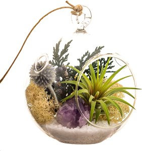 4 inch air plant crystal glass holder #ad