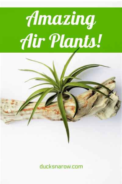 Air plants are amazing!