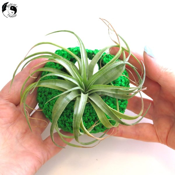 Crocheted air plant pods