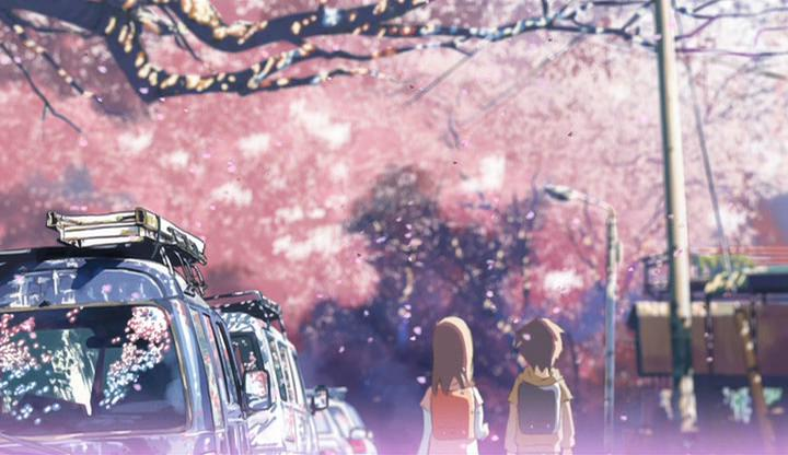 Cherry Blossoms fall at 5 cm per second