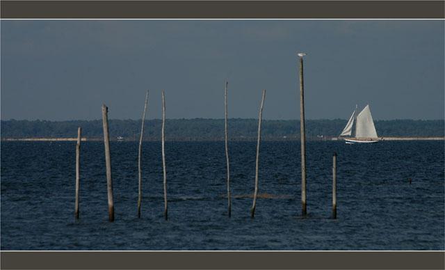 BLOG-DSC_1709-Argo et mouette piquets Meyran