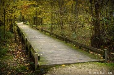 BLOG-DSC_17984-passerelle forêt enchantée Rives d'Arcins