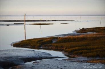 BLOG-DSC_26545-rivages Barbotière