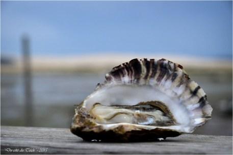 BLOG-DSC_34696-huître et dune