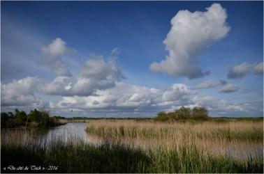 BLOG-DSC_40285-Leyre le Teich 1