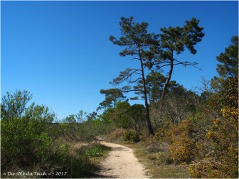 BLOG-P4128705-pins sentier prés salés Arès