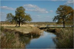 BLOG-DSC_8645-plaines du Teich