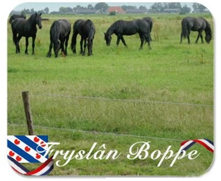 typical-friesland