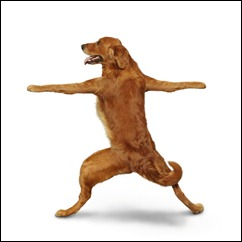 dog doing warrior pose