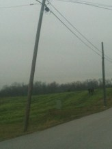 Bent Telephone Pole Outside New Albany, Indiana