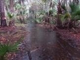 Raining in the Bull Creek Wilderness Management Area