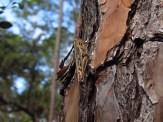 Cricket on a Tree in Orlando Wetlands Park