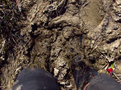 Crocs and Gaiters in the Mud in Big Cypress National Preserve