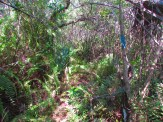 Dense Forest in Big Cypress National Preserve
