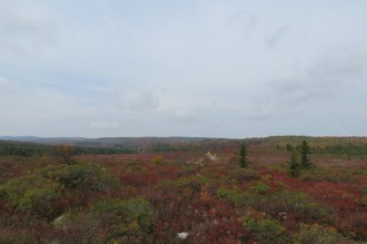 Fall Colors at Bear Rocks Preserve in the Dolly Sods Wilderness