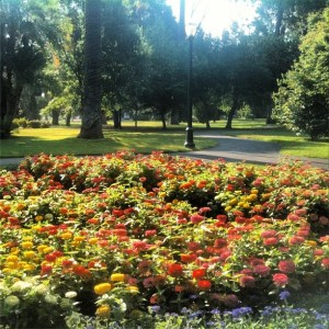 Flower Garden at the Capital Building in Sacramento