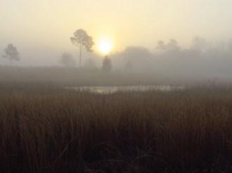 Foggy Sunrise in the Ocala National Forest Near Salt Springs