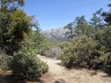 Trail on Mount San Jacinto