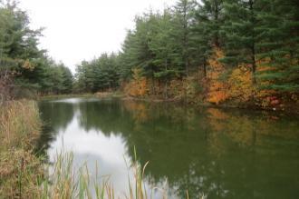 Reflection Pond Outside Chesterhill, Ohio