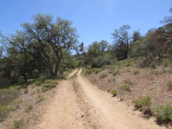 Forest Service Road in the Southern Sierra Nevada