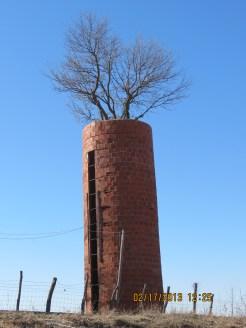 Tree in a Silo Outside Sedalia, Missouri