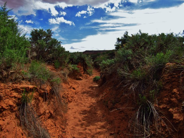 Trail in Horse Canyon