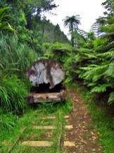 Abandoned Kauri Train in the Kaimai Range