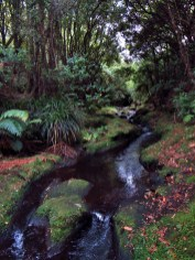 Mangakito Stream in the Kaimai Range