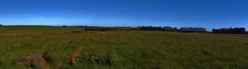 Rural Field Outside Kerikeri Panorama