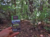 Salazon Chocolate in the Raetea Forest