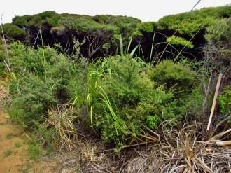 Tea Tree and Flax Scrub on Maungatiketike Point
