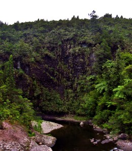 Wet Cliff in the Kaimai Range Panorama