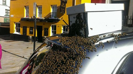 abejas-persiguen-auto-reina-2
