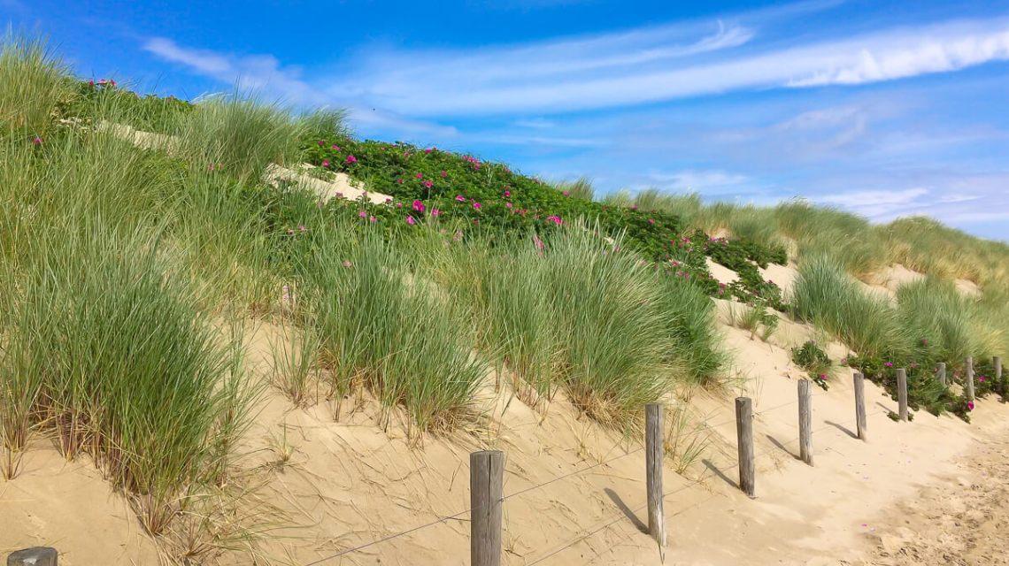 The Hague Westduinpark Dune Pathway