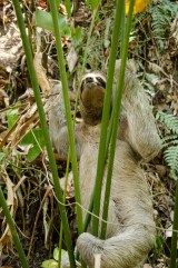 Sloth spotting, Manuel Antonio National Park, Costa Rica