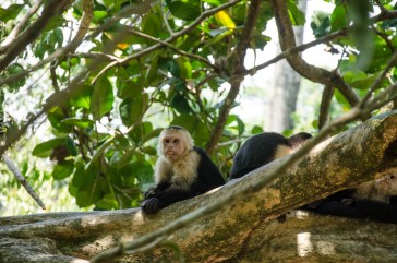 Monkey spotting in Manuel Antonio National Park