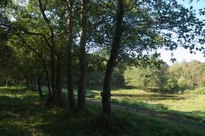 Oude boerenlandjes zijn nu nog herkenbare aan (doorgeschoten) elzen links op de voorgrond. In dit veldje is een poel aangelegd.