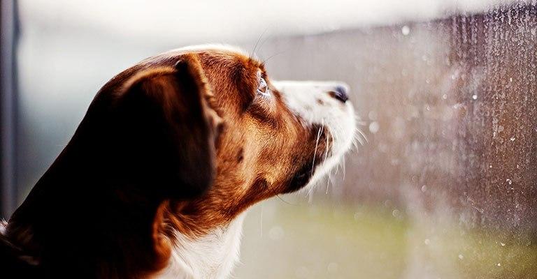 Perro no puede salir a pasear por lluvia