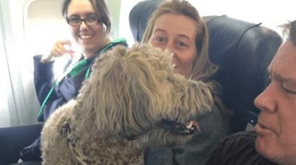 perros volando en cabina de avión
