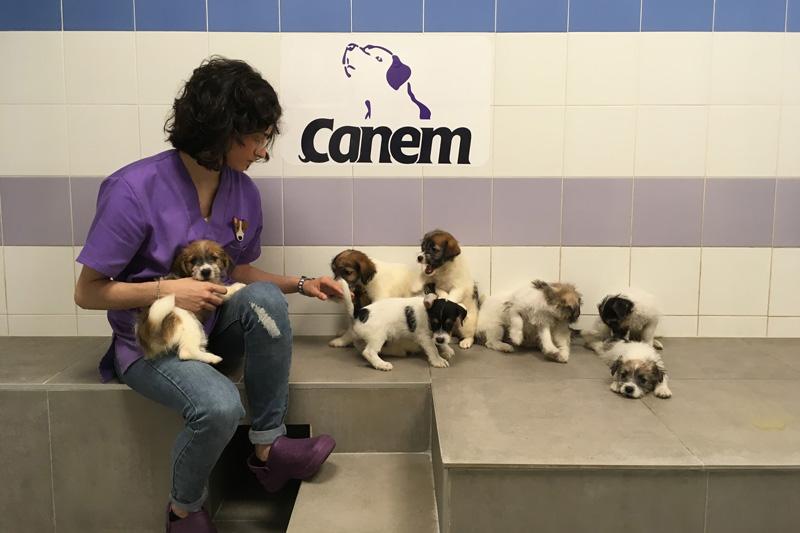 Derrumbando mitos sobre los perros de alerta médica (Parte I)