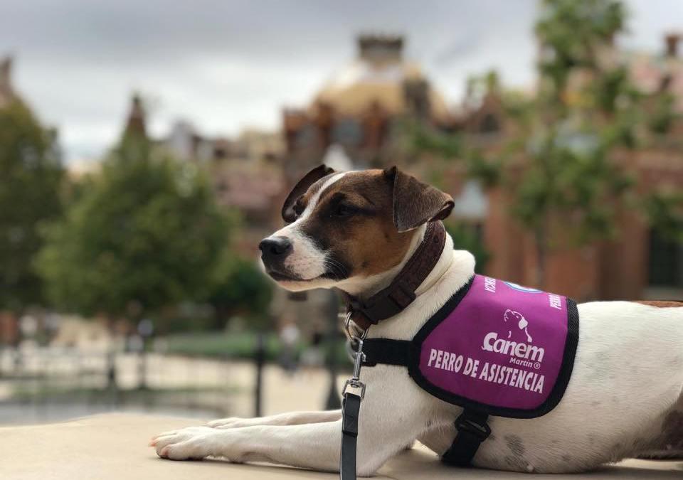 Conoce el nuevo protocolo de asignación de perros de alerta médica de la fundación
