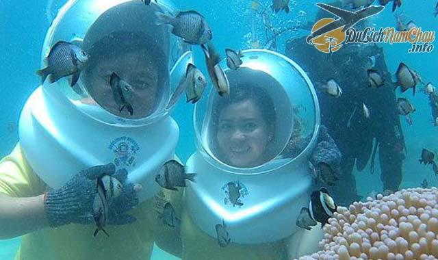 Lặn biển ngắm san hô ở đảo Hòn Tằm Nha Trang