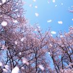 Những điều cần lưu ý khi tới Nhật Bản vào những ngày trong mùa xuân